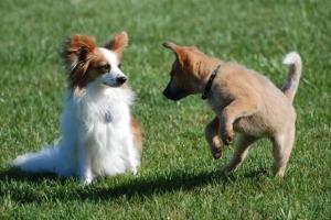 Image - Dogs, Dog Bite Liability Blog-1
